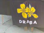 The draba flower is known to bloom even in unlikely environments, which is what organizers of the DRABA app would like to bring to businesses throughout York County (photo: Abigail Helm).